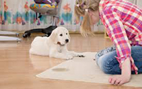 Carpet Cleaning Services Ipswich